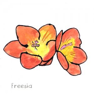 Freesia doftnot