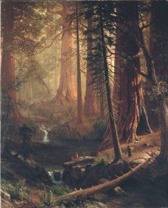 Sequoia träd i Kalifornien