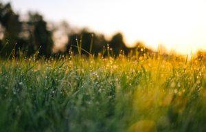 Frodig gräsbevuxen grönska